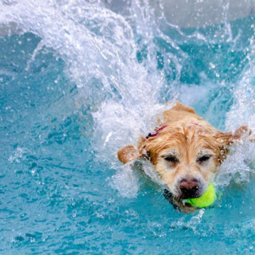 There's A Dog Friendly Pool Open In Sydney!
