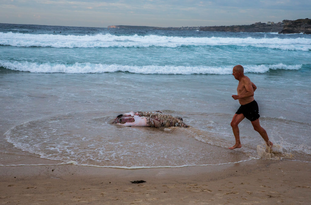 Bondi Beach Reportedly Closed After Dead Whale Found