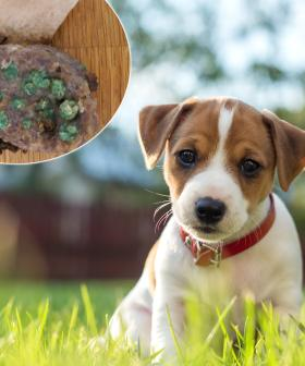 Puppy Owners Find Baited Meat In Their Yard In Sydney's Northern Beaches