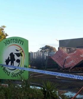 Massive Explosion At Victorian Cattle Breeding Plant Means Someone's Having A Terrible Day
