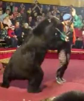 Circus Bear Mauls Its Handler In Front Of Horrified Audience Members After Being Forced To Push A Wheelbarrow
