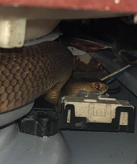 Aussie Family Discover Venomous Brown Snake Hiding Under Their Washing Machine