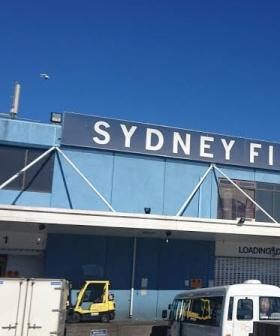 The Amount Of Fish Being Sold At Sydney's Fish Market Is Incredible