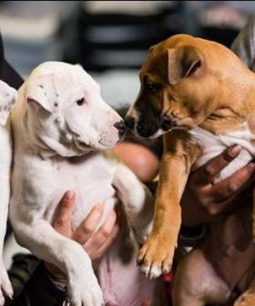 The Dog Lovers Show Is Coming Back To Sydney This Year