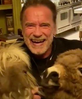 The Internet Is Dying Over Video Of Arnold Schwarzenegger Self-Isolating With His Pet Donkey & Pony