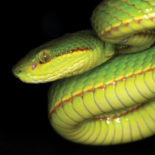 Scientists Discover New Snake Species & Decide To Name It SALAZAR SLYTHERIN!