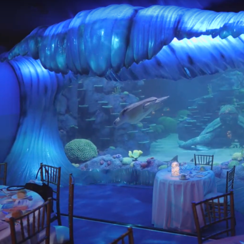 You Can Book The ENTIRE SYDNEY AQUARIUM For A 10-Person Dinner Right Now
