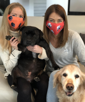 You Can Buy Face Masks With Your Pets Face On Them – And Proceeds Go To Charity