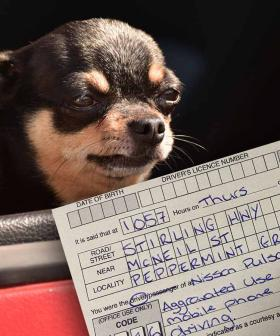 Motorist Cops $1000 Fine For Taking Pics Of Dog While Driving